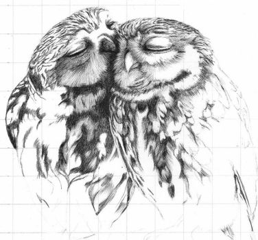 Owls by Loreleydatura