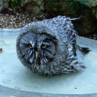 Owl Bath Time I by In-the-picture