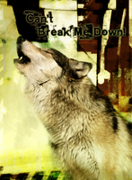 can't break me down: DARKxJAK by ShadowDivision