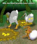 Dodos by Graphicahouse