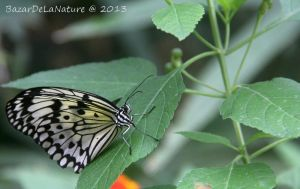 Butterfly by BazarDeLaNature