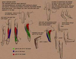 Intro to the forearm by FUNKYMONKEY1945