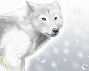 Happy Birthday! (You can post if you are having a birthday here) White_wolf_by_adiAdii