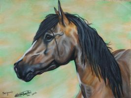 Kaimanawa Stallion by MiDestini
