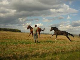 Animals - Running Horses 01 by Stock-gallery