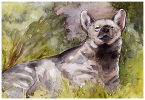 Striped hyena by MalyTraktorek