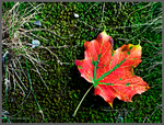 Still life with autumn leaf by Mogrianne