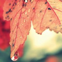 Autumn Tears. by xXcherushiiXx