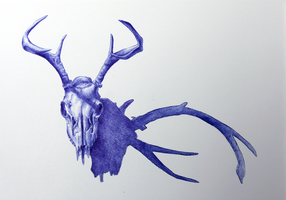 Tell this story of the deer's skull by SSSTEP