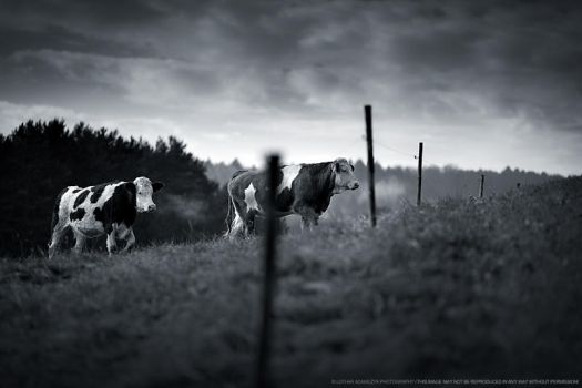 Behind The Fence by DREAMCA7CHER
