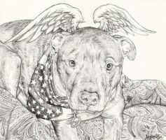 Joey the pit bull portrait by whiterabbitart