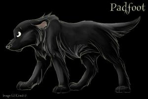 Padfoot--sketchy by kira617