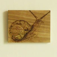 Snail by Bassika