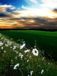 Flowers in a sunset by NorwegianAnette