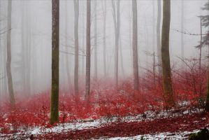 Bloodred Forest XIII by Aenea-Jones