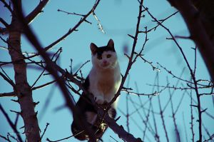 cat in the tree by seasfairytale