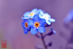 Forget me not by pipolaki123