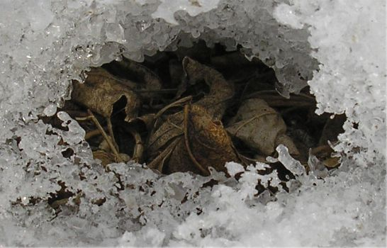 Still Asleep in Your Ice Cave by marisil