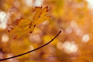 Gold Of Autumn by joiedevivre89