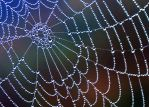 The Spider's Web by Acrinn45