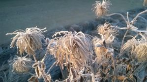 Frost by m-gosia