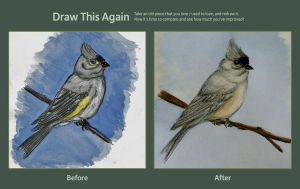 Tufted Titmouse Part 2 by 7mts