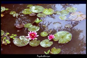 Some Lily Pads in my heart by Psychasthenique