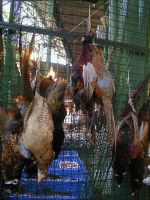 Pheasents at Market by Akki14