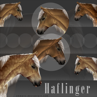 Ribbon Horse - Haflinger by EmmaVZ