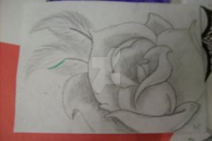 Pencil Rose 2 by RytheArtist