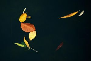 Zen, and the Art Of Autumn by EarthHart