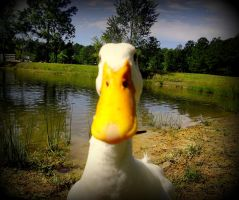 Aflac!!! by AshSuttlEs