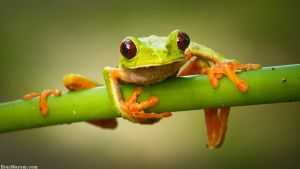 Whoops! by erezmarom