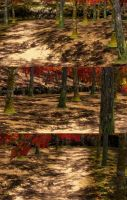 Autumn Forest(Scenery) Dead or Alive 5 by XKamsonX