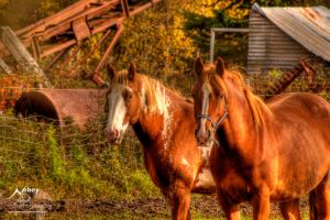 HDR Horses 2 by Nebey