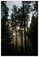 Through The Trees by impgrrrl