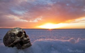 Skull in the morning by WinPics