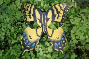 Yellow Swallowtail Butterfly Mask Leather by SilverCicada