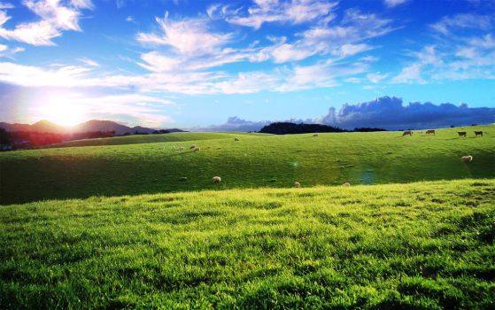 Sheep, Cows and Hills by b0bd0gz