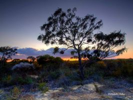 Rugged Beauty by FireflyPhotosAust