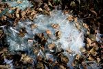 Dead Glass and Dead Leaves by Rayashi