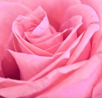 the rose by jenah