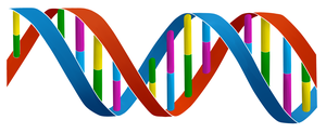 Commision for DNA Projecten BV Version 1 (LOGO) by bastiaandegoede