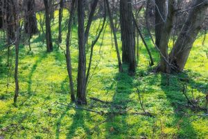 Sunlit forest by sztewe