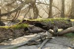 Mossy log Stock 03 by Malleni-Stock
