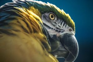 Macaw by MindYourReality