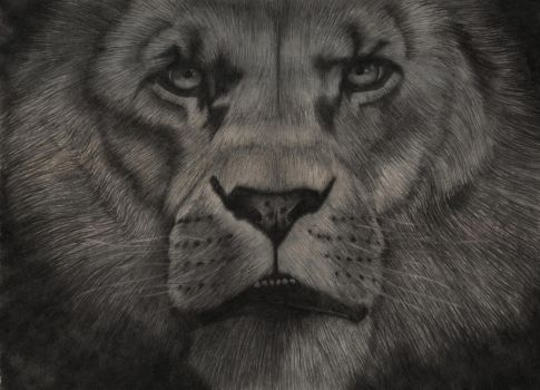 Lion by Slow-Bullet