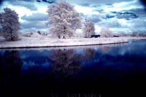 The tree in the lake by Liam-diamond