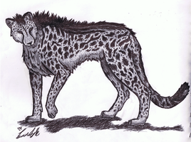 King Cheetah by SeLLeRockZ