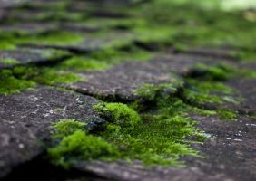 moss by Andy-Anarchy